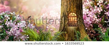 Enchanted magic house banner Stock photo © colematt