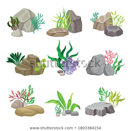 Zielone roślinność głęboko morza dekoracje kamienie Zdjęcia stock © robuart