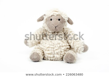 Stock photo: An isolated sheep sleeping