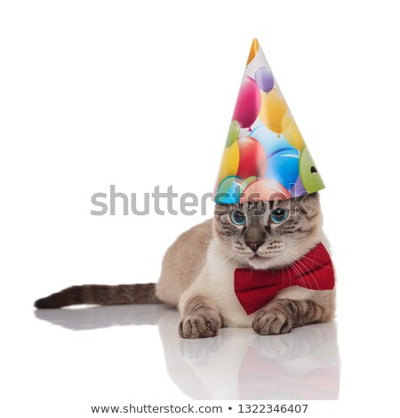 cute grey metis cat wearing bowtie and birthday hat Stock photo © feedough