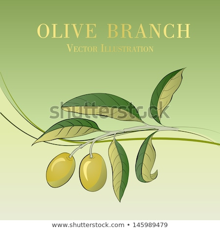 Vector symbols of Spain olive oil with two olives. stock photo © Giraffarte