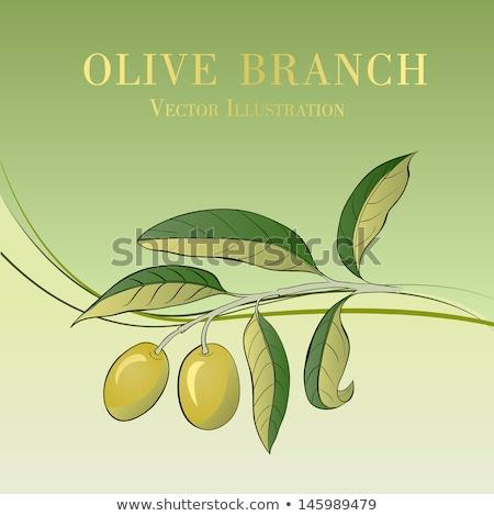 Vector symbols of Spain olive oil with two olives. Stok fotoğraf © Giraffarte