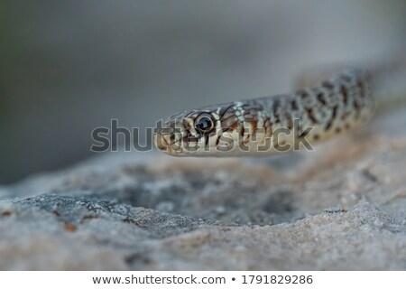 Geel slang natuur scène illustratie textuur Stockfoto © bluering