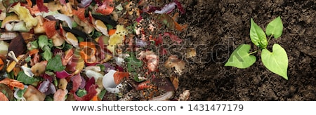 Stockfoto: Bodem · keuken · vruchten · plantaardige · vuilnis