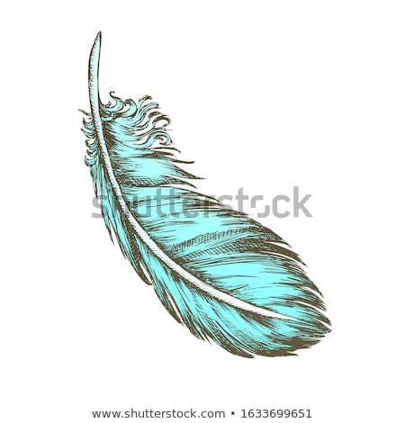 Lost Bird Outer Element Feather Monochrome Vector Stock photo © pikepicture