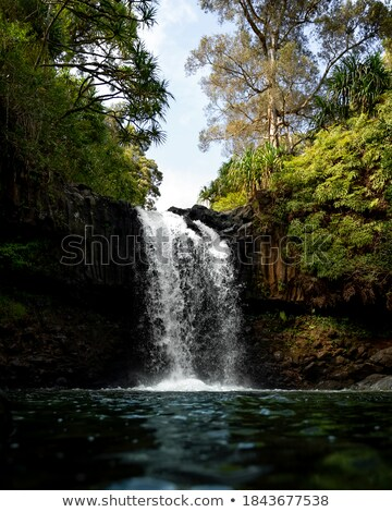 Weelderig groene loof tweeling watervallen varens Stockfoto © lovleah