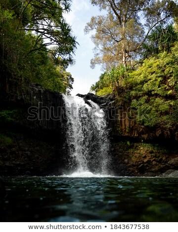 Exuberante verde follaje gemelo cascadas helechos Foto stock © lovleah