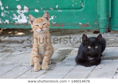 Gyönyörű sikátor macska kiscica fektet szabadtér Stock fotó © ivonnewierink
