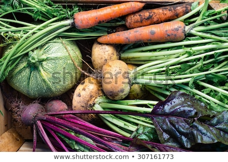 Fresh vegetables from the garden Stock photo © Eireann