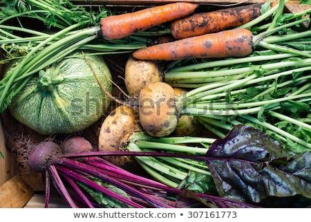légumes · frais · jardin · tomates · de · pomme · de · terre · brocoli - photo stock © eireann