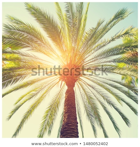 Tropical palm tree leaves in hot summer day as vintage background, summer nature and travel Stock photo © Anneleven