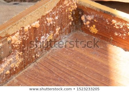 Macro afbeelding oranje groene beschimmeld Stockfoto © backyardproductions