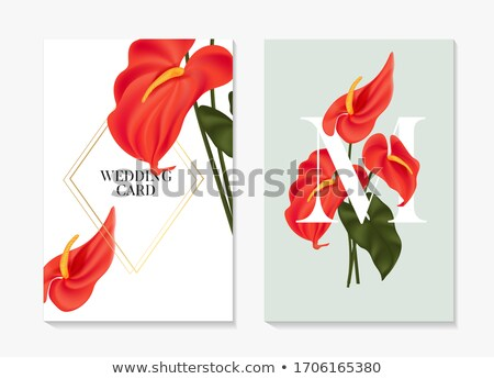 flamingo flower or anthurium flower stock photo © stoonn