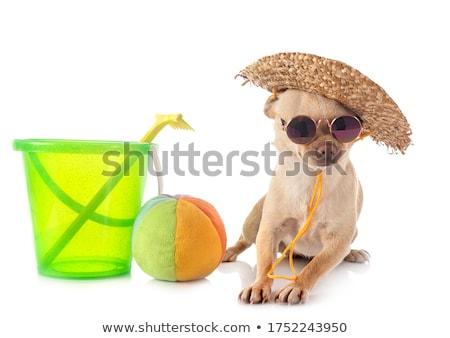 kicsi · aranyos · pihen · kutya · divat · háttér - stock fotó © cynoclub