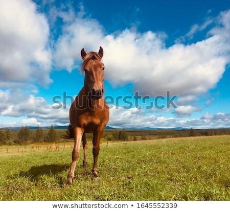 Foto stock: Cavalos · verde · amarelo · primavera · prado · Valência