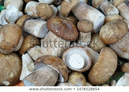 Porcini Mushrooms Background Stock photo © zhekos