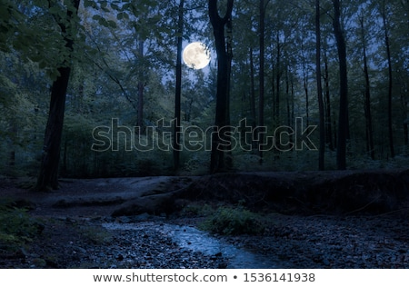 brook in forest. Stock photo © taden