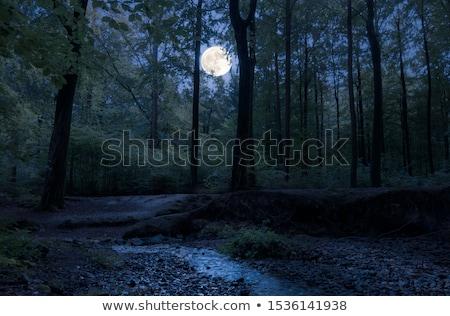 zonnestraal · groene · bos · water · boom · voorjaar - stockfoto © taden