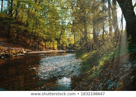 Stock fotó: Tükröződések · folyó · kígyó · park · USA · erdő