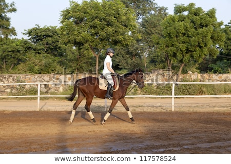 woman riding her horse in the parcour stock photo © meinzahn