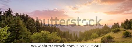 Berg landschap bomen groene zonnige bos Stockfoto © pab_map