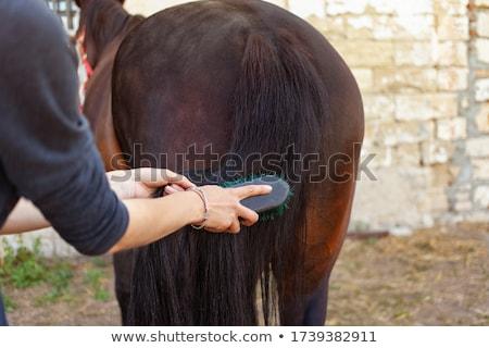 Lovas ló nők fiatal felnőtt barna hajú Stock fotó © phbcz