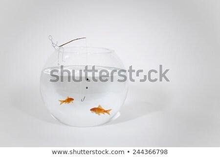 Fishing in fishbowl Stock photo © tilo