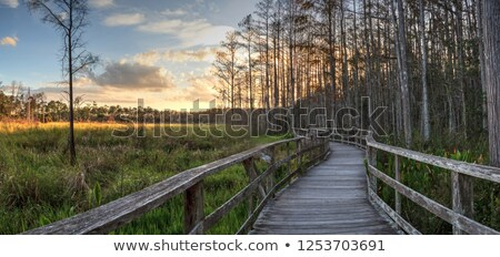 Swampland in Florida Stock photo © Stocksnapper