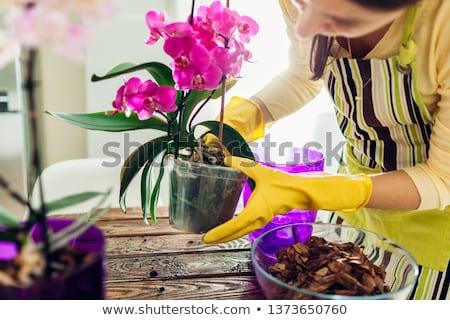 Stok fotoğraf: Mutlu · kadın · orkide · çiçek · portre