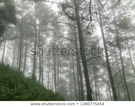 misty morning bridge stock photo © paulfleet
