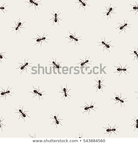 rabisco · vetor · insetos · eps · 10 - foto stock © netkov1