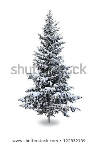 Fenyőfa fák hó hóvihar hegyek fa Stock fotó © meinzahn