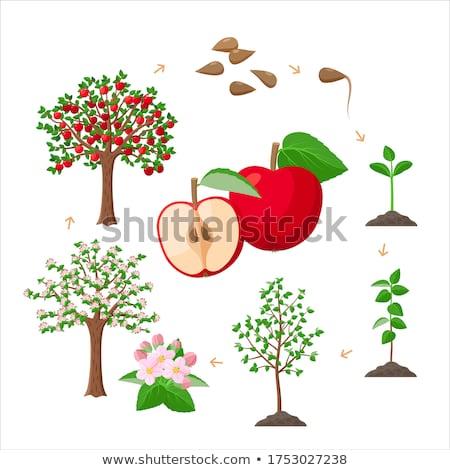 magnólia · maçã · flores · abstrato · fundo · voar - foto stock © neirfy