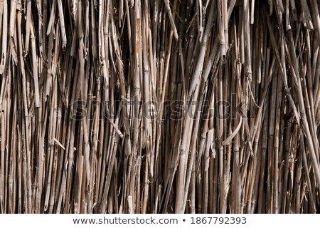 Abstract view of rotten reeds Stock photo © meinzahn