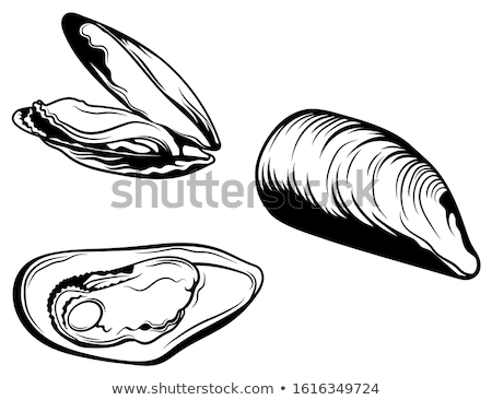 Mussell Shell Stock photo © Undy