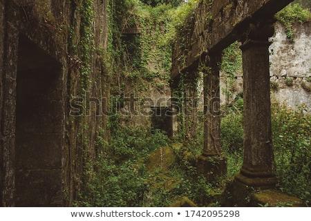 Ruínas floresta edifício árvores pedra plantas Foto stock © grafvision