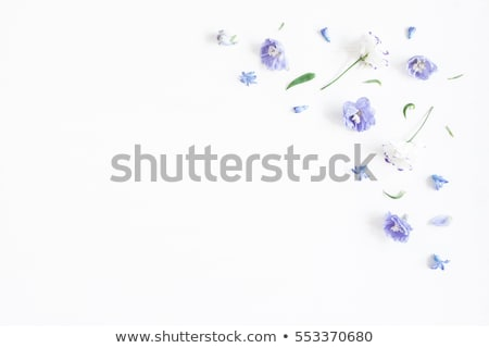 blue and magenta leaves isolated on white stock photo © cidepix