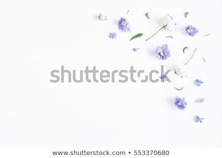 Blu magenta foglie isolato bianco business Foto d'archivio © cidepix