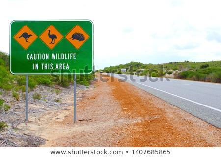 Wilde dieren Australië illustratie natuur achtergrond kunst Stockfoto © bluering