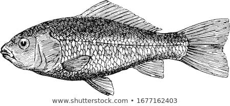 金魚 海 美 赤 規模 画像 ストックフォト © blackmoon979