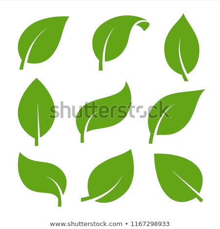beautiful house and garden icon design green leafs and trees wi stock photo © tefi
