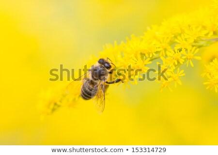 arı · uçan · çiçekler · egzotik · güzel · çiçek - stok fotoğraf © klinker