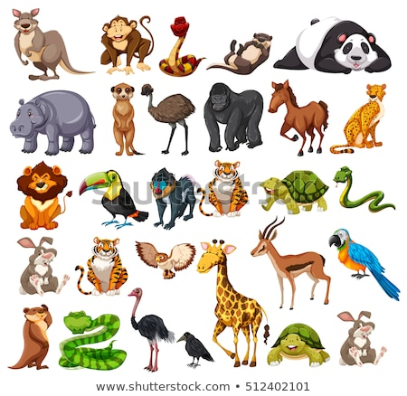 Different types of wild animals on white background Stock photo © bluering