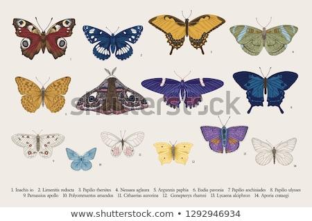 Vintage vlinder ingesteld decoratief ingericht organisch Stockfoto © Soleil