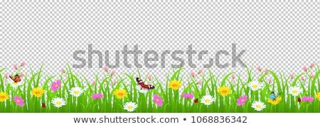 границе · цветы · прозрачный · градиент · аннотация - Сток-фото © adamson