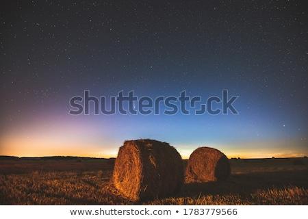 Yaz alanları yeşil çayır gökyüzü çim Stok fotoğraf © wildman