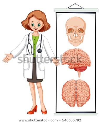 Stock foto: Female Doctor And Brian Diagram