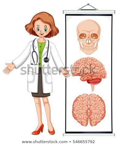 umani · cranio · diagramma · illustrazione · medici · ossa - foto d'archivio © colematt