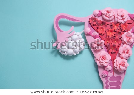 Beautiful female uterus and ovaries flower background Stock photo © Tefi