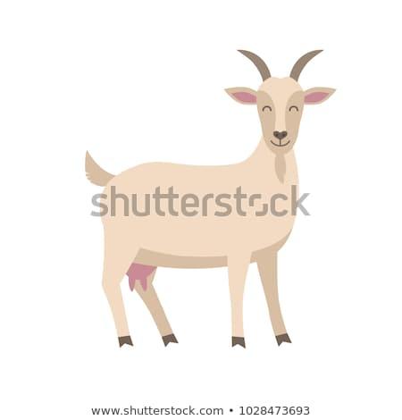 Geit illustratie witte dier cartoon vector Stockfoto © lenm